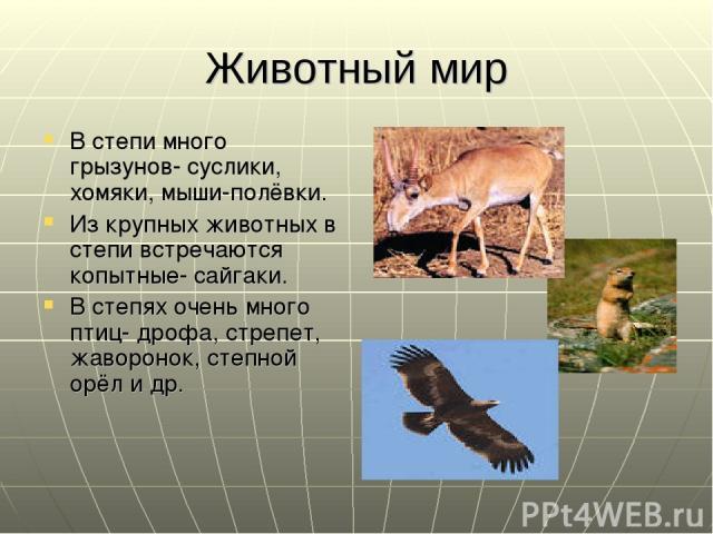 Животный мир В степи много грызунов- суслики, хомяки, мыши-полёвки. Из крупных животных в степи встречаются копытные- сайгаки. В степях очень много птиц- дрофа, стрепет, жаворонок, степной орёл и др.