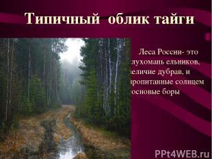 Леса России- это глухомань ельников, величие дубрав, и пропитанные солнцем сосно