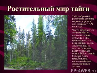 Тайгу образуют различные хвойные породы деревьев, они занимают 70% площади. Част
