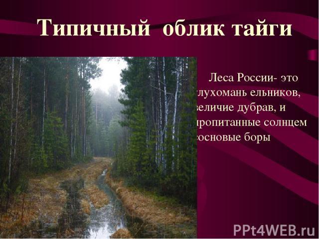 Леса России- это глухомань ельников, величие дубрав, и пропитанные солнцем сосновые боры Типичный облик тайги