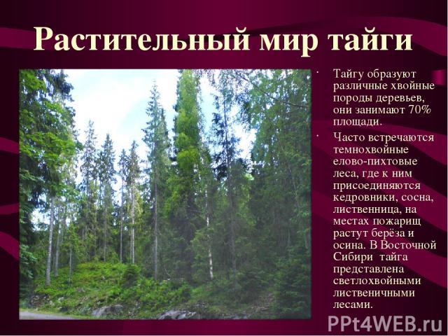 Тайгу образуют различные хвойные породы деревьев, они занимают 70% площади. Часто встречаются темнохвойные елово-пихтовые леса, где к ним присоединяются кедровники, сосна, лиственница, на местах пожарищ растут берёза и осина. В Восточной Сибири тайг…