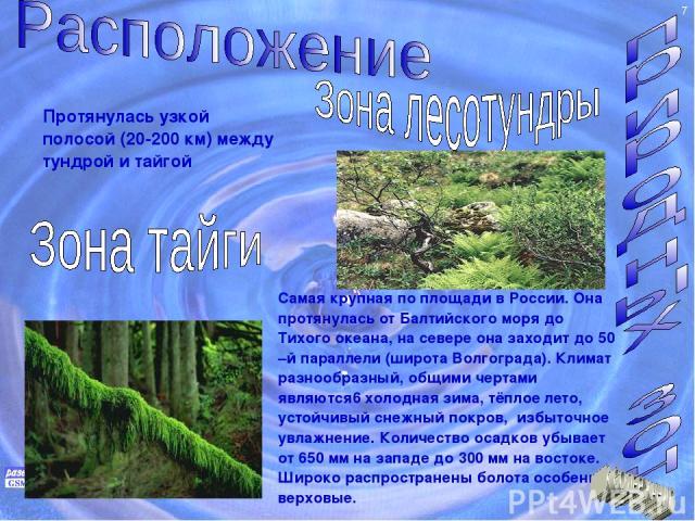 Протянулась узкой полосой (20-200 км) между тундрой и тайгой Самая крупная по площади в России. Она протянулась от Балтийского моря до Тихого океана, на севере она заходит до 50 –й параллели (широта Волгограда). Климат разнообразный, общими чертами …