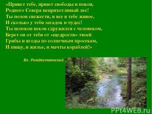«Привет тебе, приют свободы и покоя, Родного Севера неприхотливый лес! Ты полон