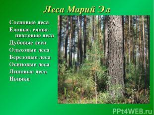Леса Марий Эл Сосновые леса Еловые, елово-пихтовые леса Дубовые леса Ольховые ле