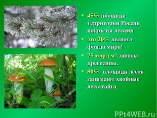 45% площади территории России покрыты лесами это 20% лесного фонда мира! 75 млрд