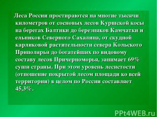 Леса России простираются на многие тысячи километров от сосновых лесов Куршской