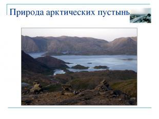 Природа арктических пустынь