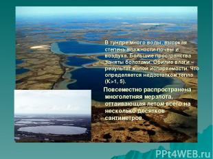 В тундре много воды, высокая степень влажности почвы и воздуха. Большие простран