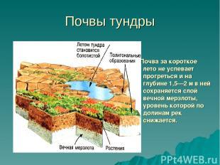 Почвы тундры Почва за короткое лето не успевает прогреться и на глубине 1,5—2 м