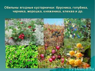 Обильны ягодные кустарнички: брусника, голубика, черника, морошка, княженика, кл