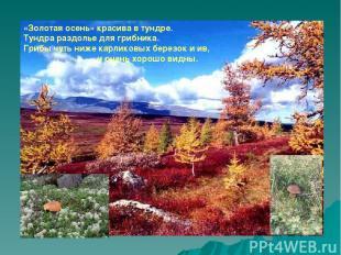 «Золотая осень» красива в тундре. Тундра раздолье для грибника. Грибы чуть ниже