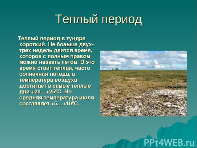 Теплый период Теплый период в тундре короткий. Не больше двух-трех недель длится время, которое с полным правом можно назвать летом. В это время стоит теплая, часто солнечная погода, а температура воздуха достигает в самые теплые дни +20…+25ºС. Но с…