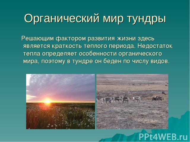 Органический мир тундры Решающим фактором развития жизни здесь является краткость теплого периода. Недостаток тепла определяет особенности органического мира, поэтому в тундре он беден по числу видов.