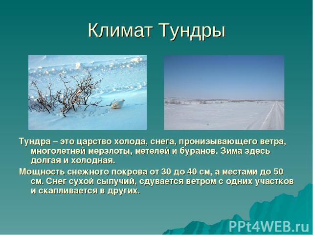 Климат Тундры Тундра – это царство холода, снега, пронизывающего ветра, многолетней мерзлоты, метелей и буранов. Зима здесь долгая и холодная. Мощность снежного покрова от 30 до 40 см, а местами до 50 см. Снег сухой сыпучий, сдувается ветром с одних…