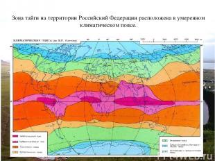 Зона тайги на территории Российский Федерации расположена в умеренном климатичес