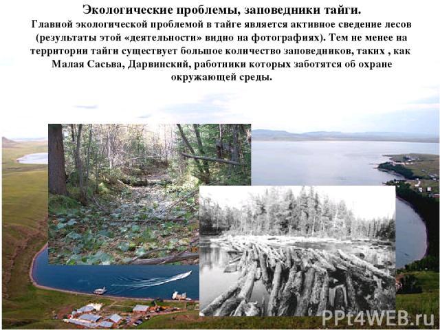 Экологические проблемы, заповедники тайги. Главной экологической проблемой в тайге является активное сведение лесов (результаты этой «деятельности» видно на фотографиях). Тем не менее на территории тайги существует большое количество заповедников, т…