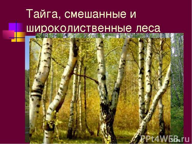 Тайга, смешанные и широколиственные леса