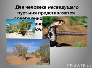 Для человека несведущего пустыня представляется совершенно безжизненным простран