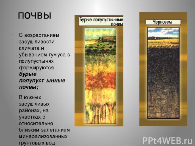 почвы С возрастанием засушливости климата и убыванием гумуса в полупустынях формируются бурые полупустынные почвы; В южных засушливых районах, на участках с относительно близким залеганием минерализованных грунтовых вод развиты солонцы и солончаки (…