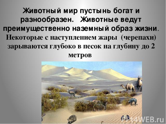 Животный мир пустынь богат и разнообразен. Животные ведут преимущественно наземный образ жизни. Некоторые с наступлением жары (черепахи) зарываются глубоко в песок на глубину до 2 метров