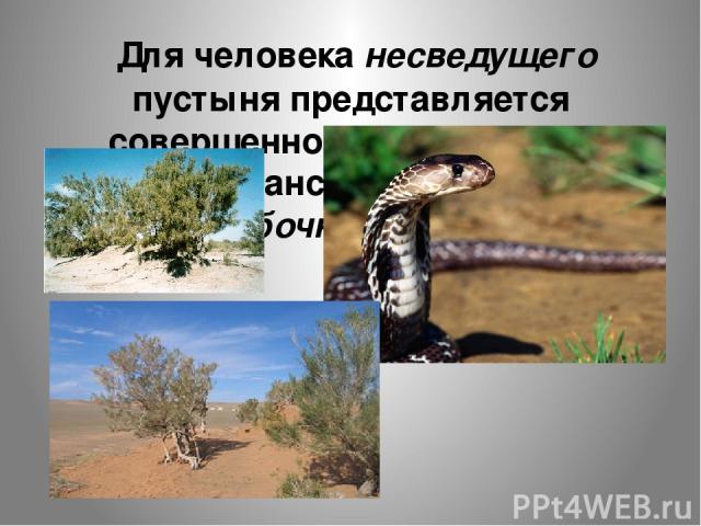 Для человека несведущего пустыня представляется совершенно безжизненным пространством. Но это ошибочное мнение.
