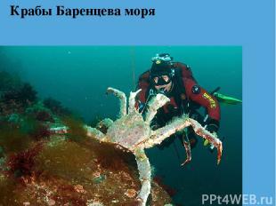 Крабы Баренцева моря