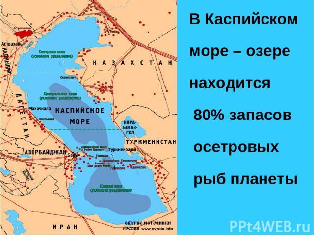 В Каспийском море – озере находится 80% запасов осетровых рыб планеты