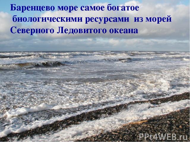 Баренцево море самое богатое биологическими ресурсами из морей Северного Ледовитого океана