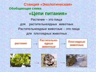 Станция «Экологическая» Обобщающая схема «Цепи питания» Растение – это пища для