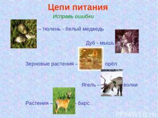 Цепи питания. Исправь ошибки Ива – тюлень - белый медведь Дуб - мышь – сойка Зер