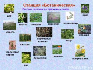 Станция «Ботаническая» Рассели растения по природным зонам