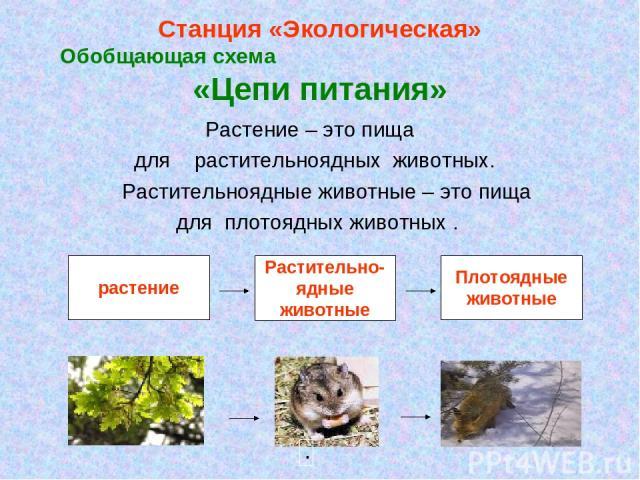 Станция «Экологическая» Обобщающая схема «Цепи питания» Растение – это пища для растительноядных животных. Растительноядные животные – это пища для плотоядных животных .