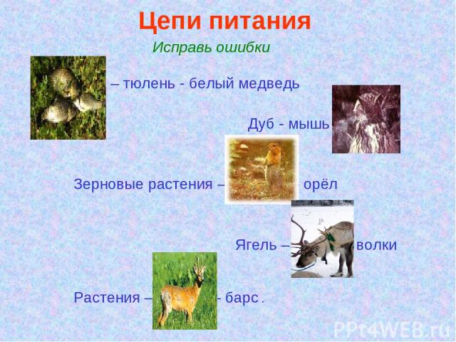 Цепи питания. Исправь ошибки Ива – тюлень - белый медведь Дуб - мышь – сойка Зерновые растения –термиты – орёл Ягель – песец – волки Растения – медуза – барс .