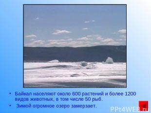 Байкал населяют около 600 растений и более 1200 видов животных, в том числе 50 р