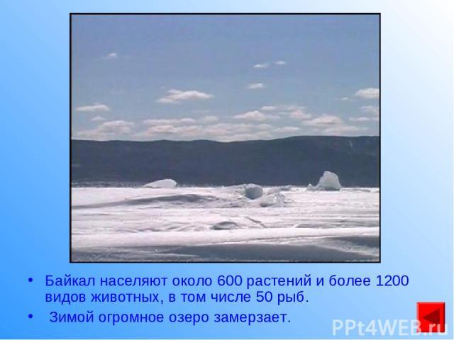 Байкал населяют около 600 растений и более 1200 видов животных, в том числе 50 рыб. Зимой огромное озеро замерзает.