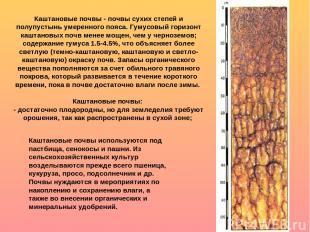 Каштановые почвы - почвы сухих степей и полупустынь умеренного пояса. Гумусовый