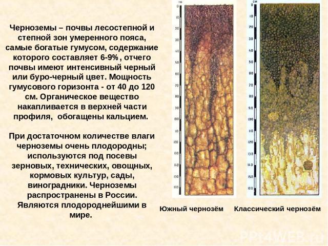Черноземы – почвы лесостепной и степной зон умеренного пояса, самые богатые гумусом, содержание которого составляет 6-9%, отчего почвы имеют интенсивный черный или буро-черный цвет. Мощность гумусового горизонта - от 40 до 120 см. Органическое вещес…