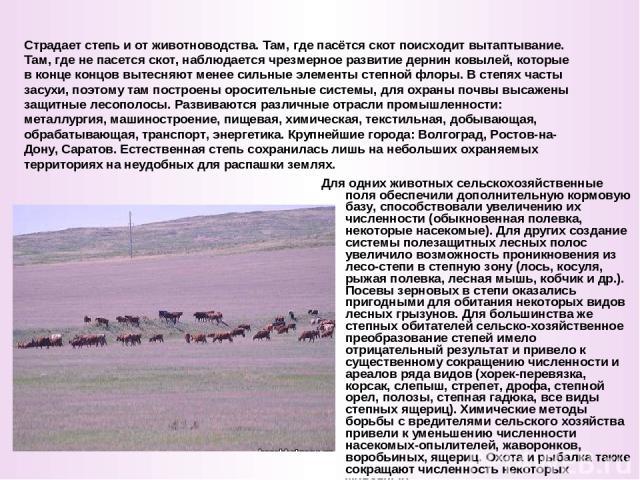 Для одних животных сельскохозяйственные поля обеспечили дополнительную кормовую базу, способствовали увеличению их численности (обыкновенная полевка, некоторые насекомые). Для других создание системы полезащитных лесных полос увеличило возможность п…