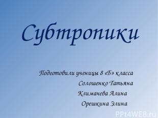 Субтропики Подготовили ученицы 8 «Б» класса Солошенко Татьяна Климачева Алина Ор
