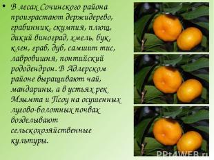 В лесах Сочинского района произрастают держидерево, грабинник, скумпия, плющ, ди