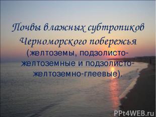 Почвы влажных субтропиков Черноморского побережья (желтоземы, подзолисто-желтозе