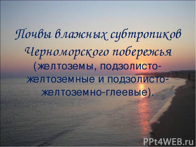 Почвы влажных субтропиков Черноморского побережья (желтоземы, подзолисто-желтоземные и подзолисто-желтоземно-глеевые).