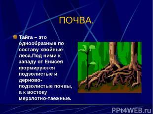 ПОЧВА. Тайга – это однообразные по составу хвойные леса.Под ними к западу от Ени