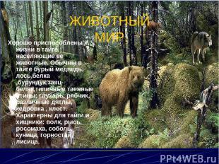 ЖИВОТНЫЙ МИР. Хорошо приспособлены к жизни в тайге населяющие ее животные. Обычн