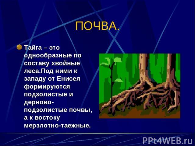ПОЧВА. Тайга – это однообразные по составу хвойные леса.Под ними к западу от Енисея формируются подзолистые и дерново-подзолистые почвы, а к востоку мерзлотно-таежные.