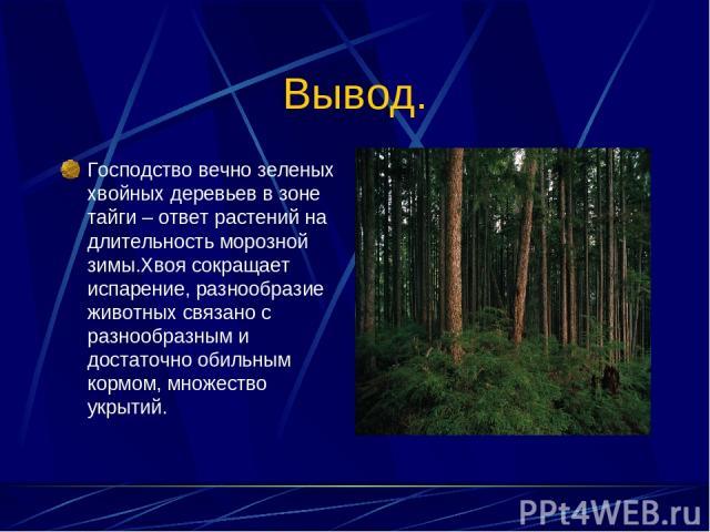 Вывод. Господство вечно зеленых хвойных деревьев в зоне тайги – ответ растений на длительность морозной зимы.Хвоя сокращает испарение, разнообразие животных связано с разнообразным и достаточно обильным кормом, множество укрытий.