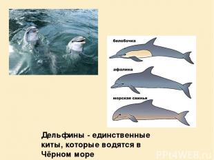Дельфины - единственные киты, которые водятся в Чёрном море