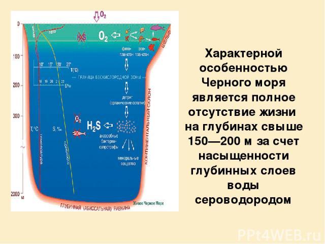 Характерной особенностью Черного моря является полное отсутствие жизни на глубинах свыше 150—200 м за счет насыщенности глубинных слоев воды сероводородом