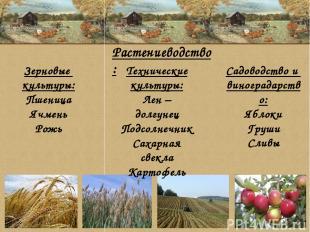 Зерновые культуры: Пшеница Ячмень Рожь Технические культуры: Лен – долгунец Подс