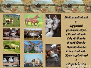 Животноводство: Крупный рогатый скот Свиноводство Овцеводство Козоводство Конево